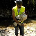 La sorpresa del día: una cría de cigüeña que había caído al río.  La entregamos a la policía local.