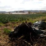 Una montaña de plásticos agrícolas a pie de huerta...