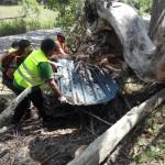 La fuerza de las riadas literalmente empotra grandes chapas entre troncos muertos..