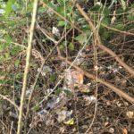 La basura está escondida en sitios que ni se ven a simple vista...