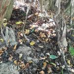 Las toallitas, el indeseado huésped más frecuente de nuestros ríos...