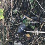 En los entornos de varias huertas había residuos como estos...
