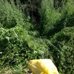 Tuvimos que hacer un camino a través de un auténtico bosque de altísimas ortigas para poder sacar los residuos recogidos