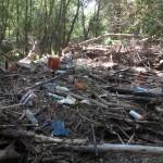 El aspecto de muchos de nuestros sotos es realmente lamentable, especialmente tras las últimas crecidas